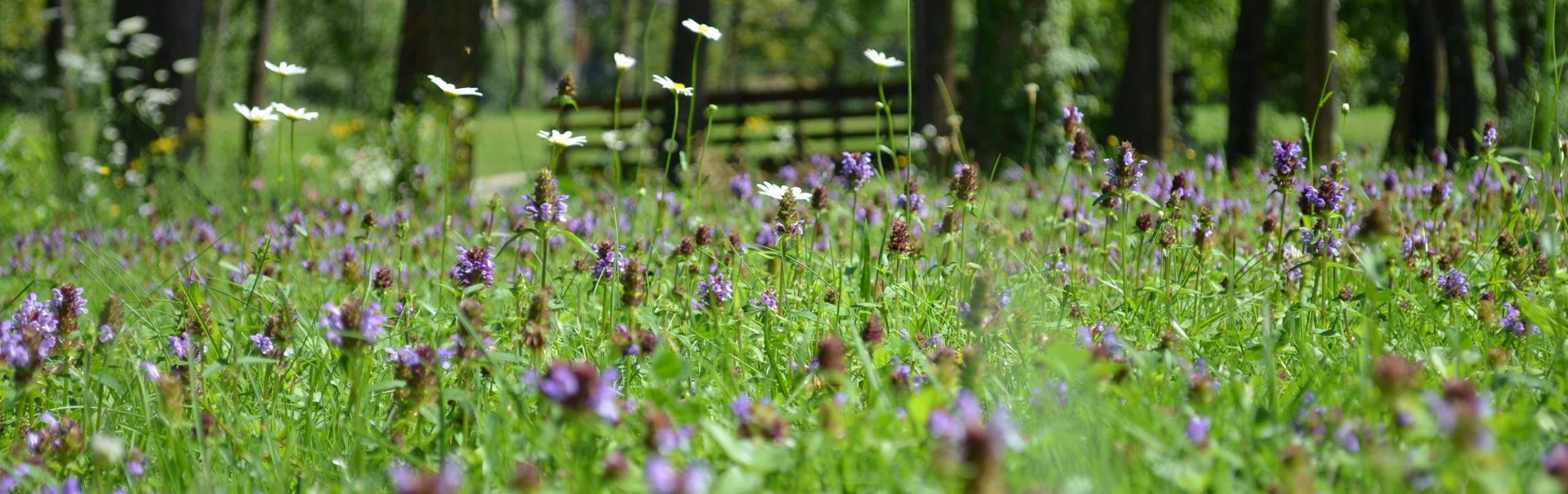 cropped-01-08-14-lago-di-cavazzo-mondo-in-miniatura1.jpg