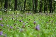 cropped-01-08-14-lago-di-cavazzo-mondo-in-miniatura2.jpg