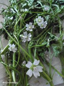 fiori malva