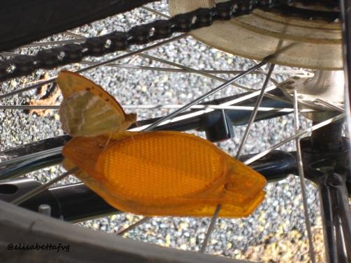 3-farfalla