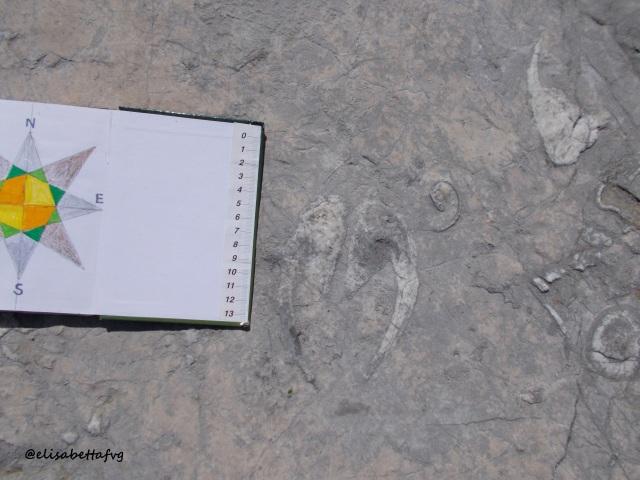 15 Fossili