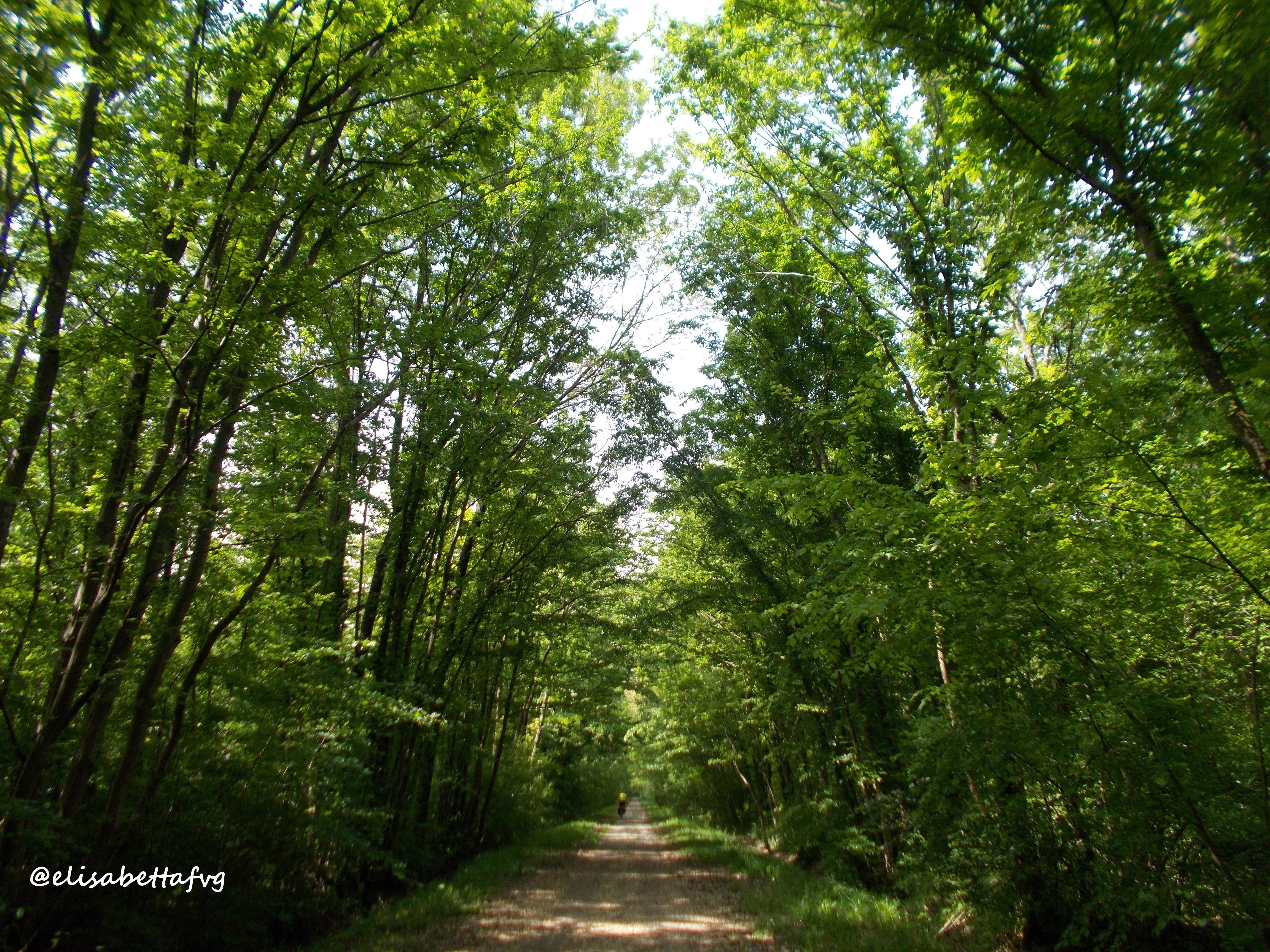 Selva di Arvonchi